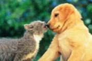Psi i mačke otkrivaju vašu osobnost