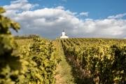 Gdje se proizvodi najskuplje vino na svijetu?